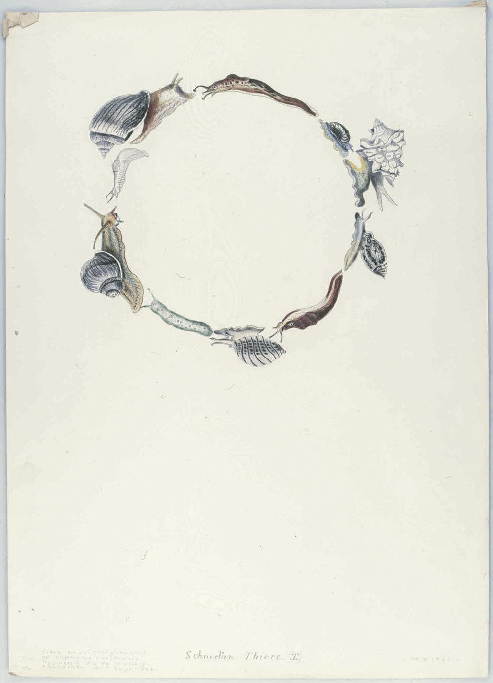 Schnecken-Tiere (I) | 1965 | Buntstift auf Karton | 62 x 44,5 cm