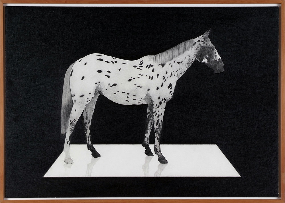 o.T. (Appaloosa) | 2009 | Bleistift auf Karton | 52 x 73 cm
