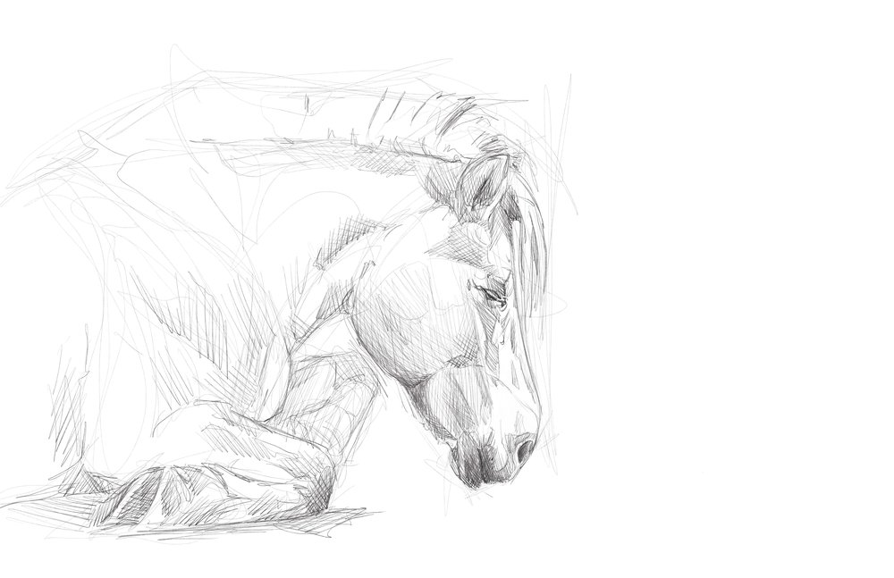 drawing_fjord_horse