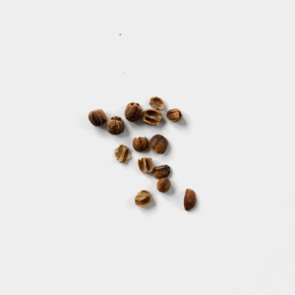 Qishr_coffee_husks