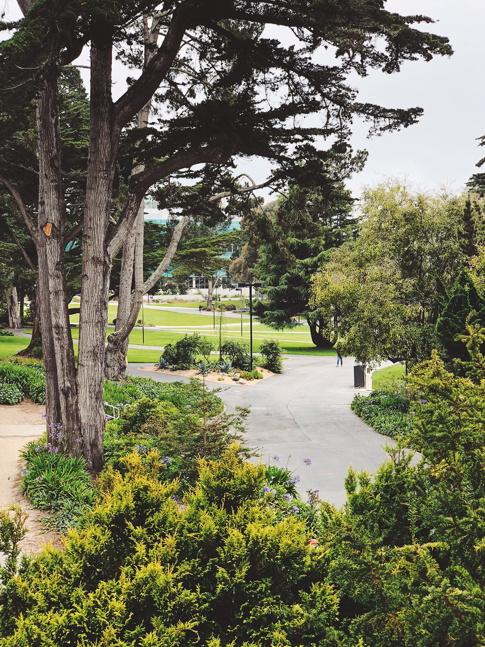 The campus is a veritable jungle.