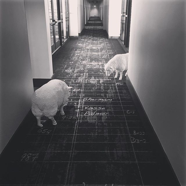 In order to be an immaculate member of a flock of sheep, one must above all be a sheep oneself  #sheep #alberteinstein #thegeorgehotel #thegeorge #collegestationtexas #texasaandm #texas #sec #southeasternconference #wtfisoutsidemyroom #sheepinthehallway #protagonistdigital