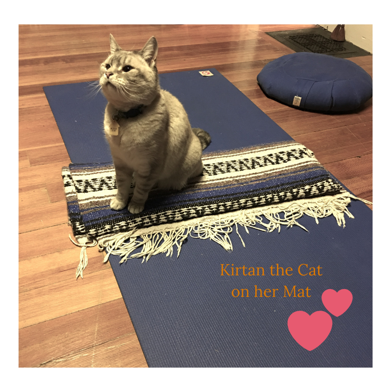 Kirtan the Cat on her Mat.png