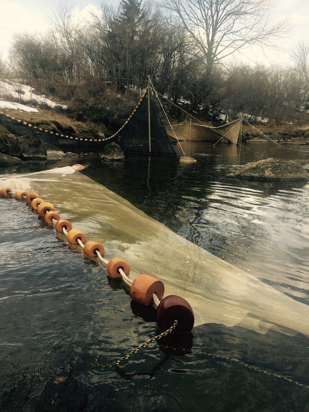 Fyke nets set at nearby fishing spot