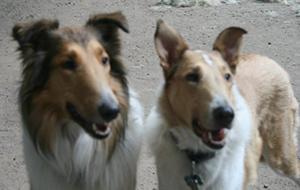 Jasper and Troy