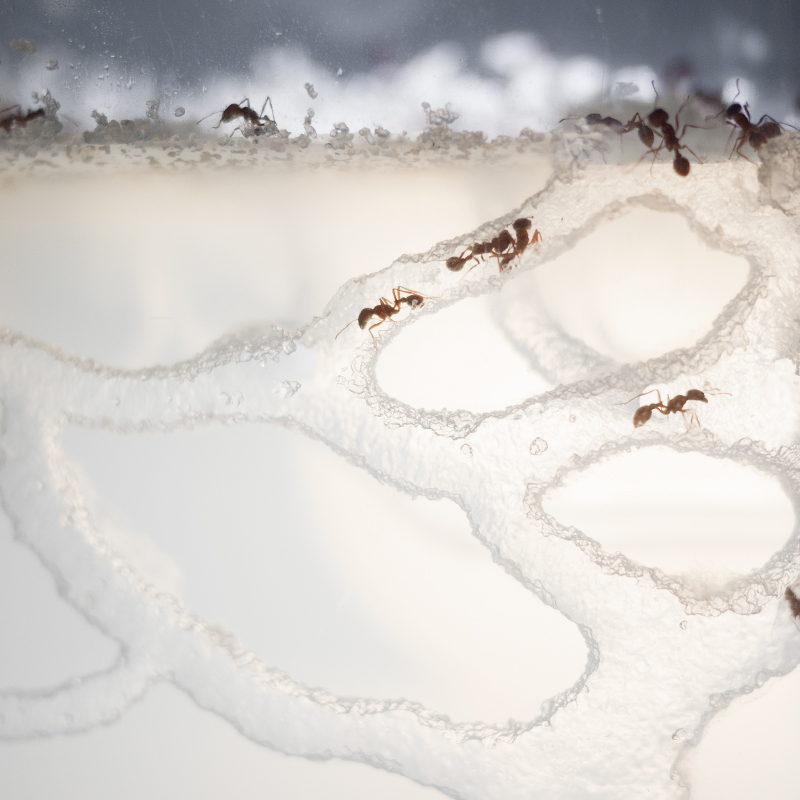 colony_necklace_ants_d.jpg
