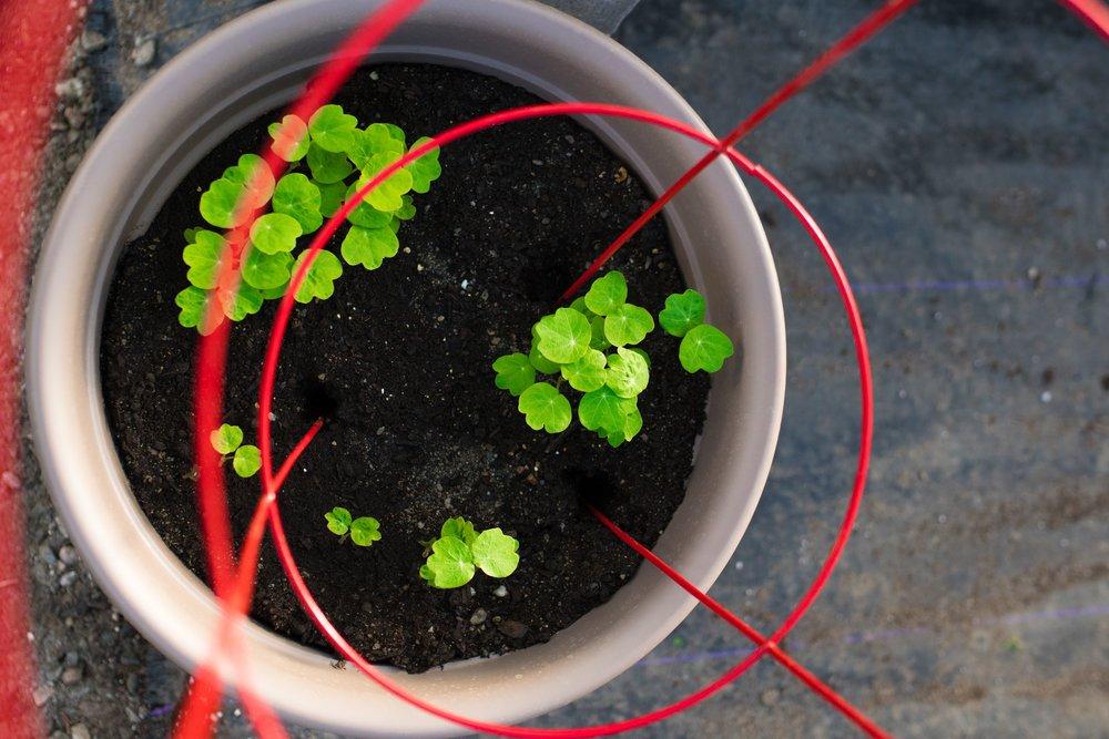 Arethusa Gardens Herbs