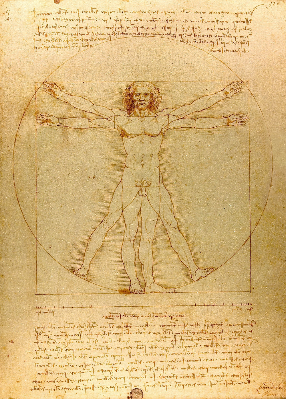 Figure 1.  Leonardo da Vinci,  The Vitruvian Man  (1490).