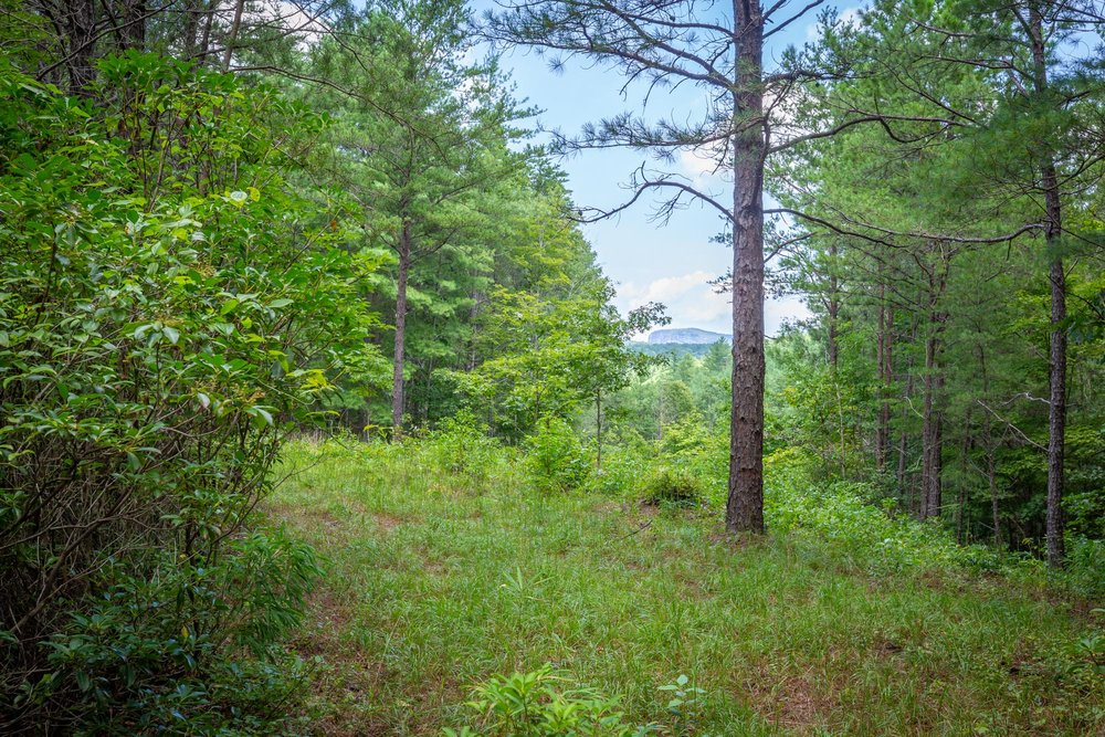 Pisgah Preserve Lot 58.jpg