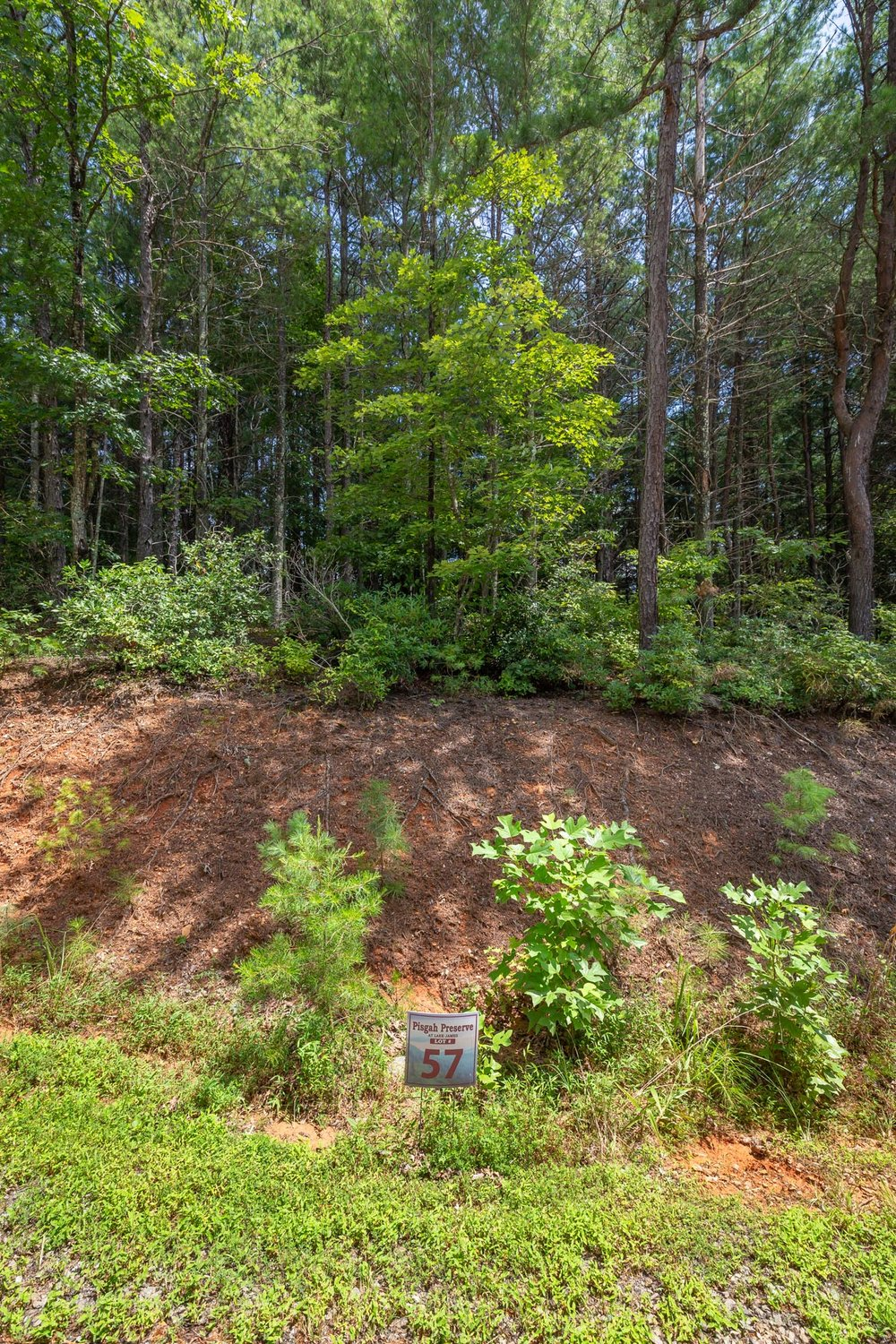 Pisgah Preserve Lot 57.jpg