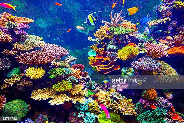 Photo by goinyk/iStock / Getty Images What The Coral Reef should look like!