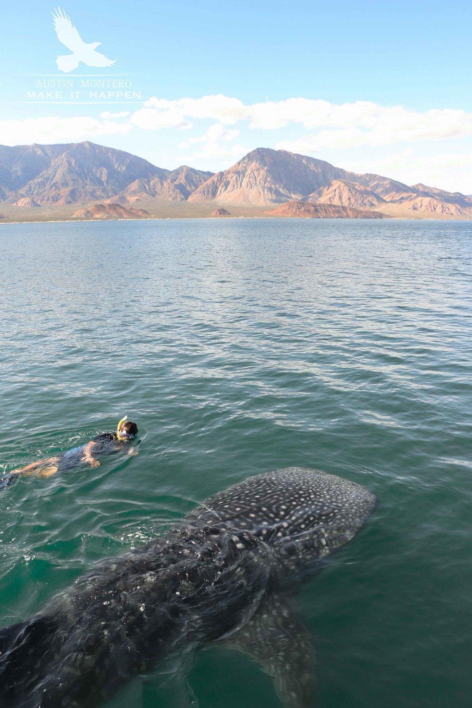 Whale shark interaction (Austin Montero)-2red.jpg