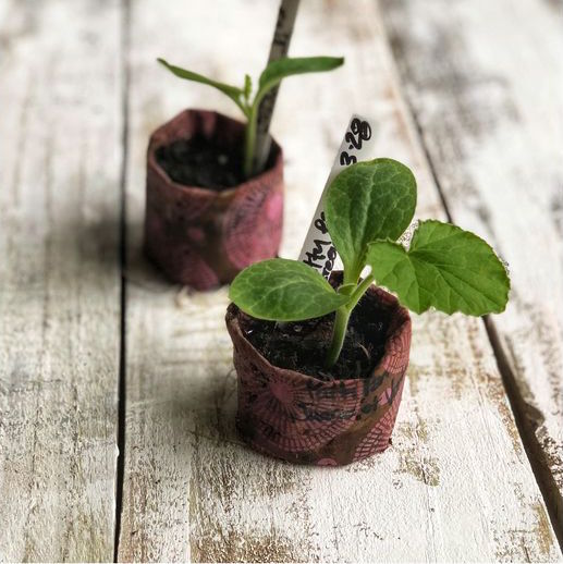 seedling plants starters.jpg