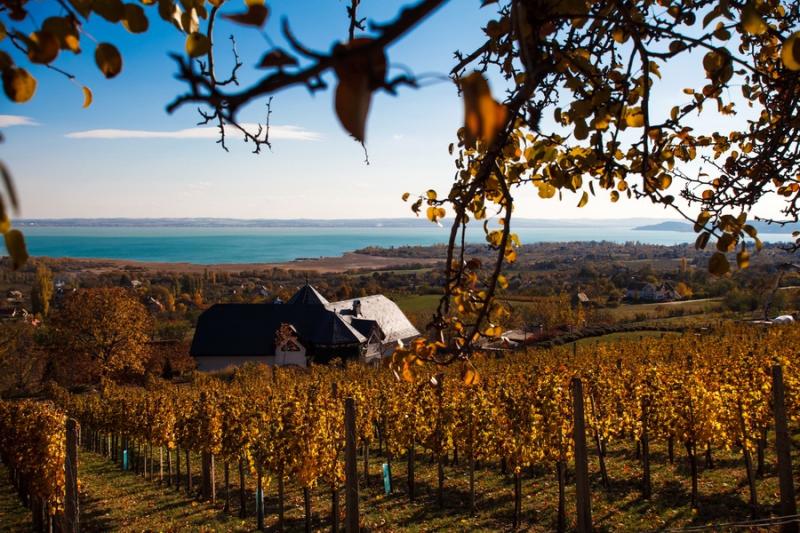 Balaton winery.jpg
