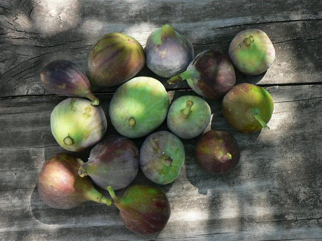 - figs