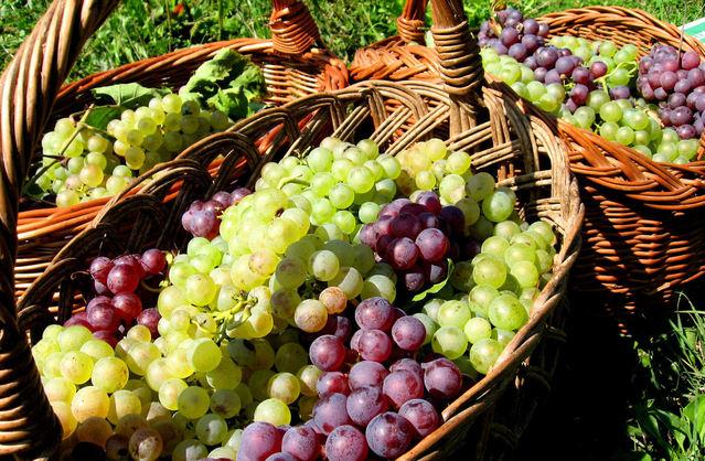 - grapes