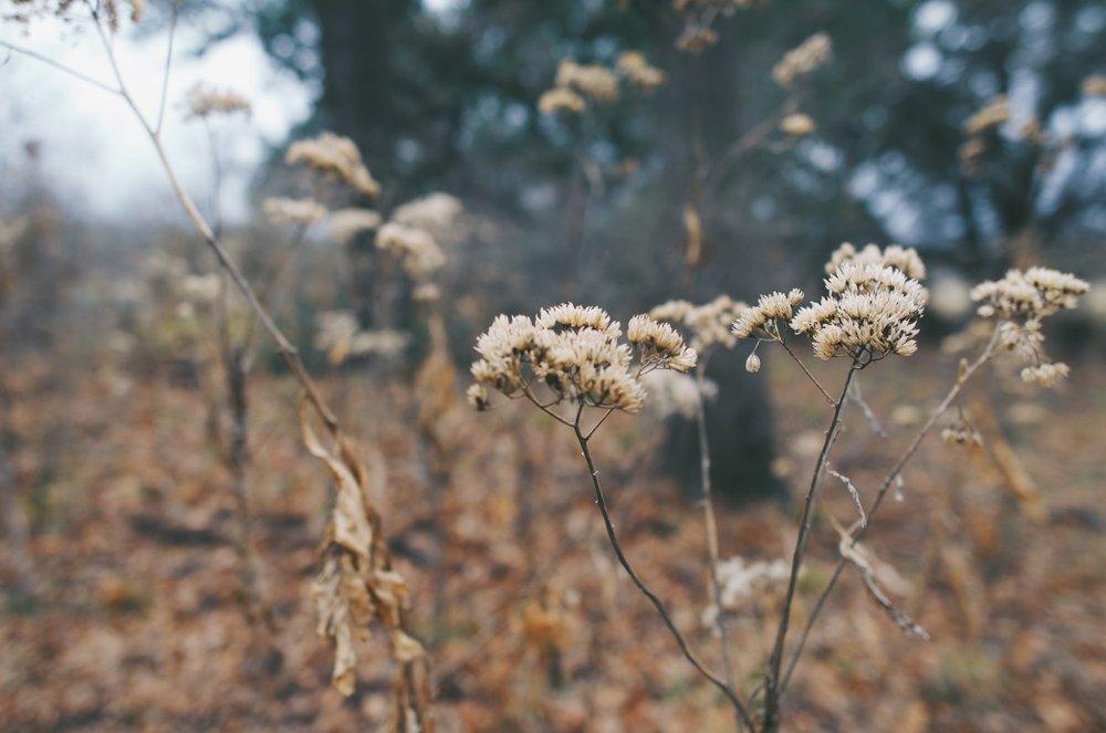 Texas Winter Plants