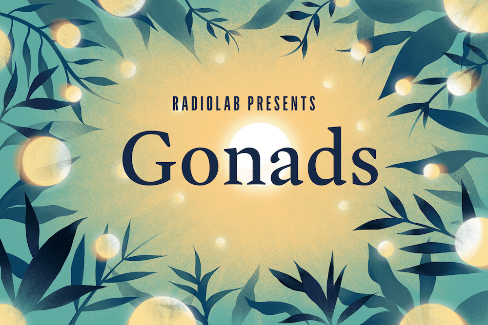 Gonads.png