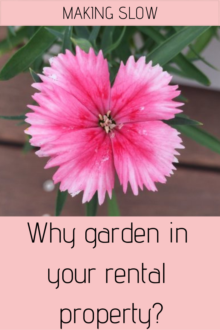 Why should you go to  the effort of gardening when living in a rental property?
