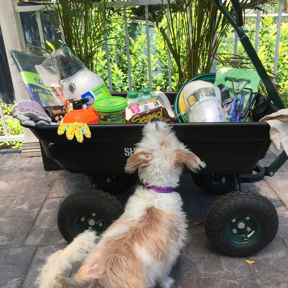 Ada checking out the garden goodies.