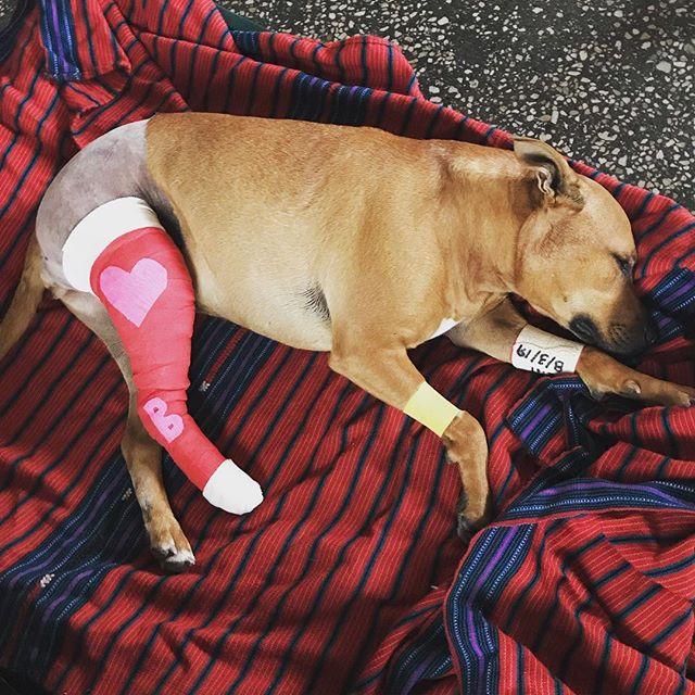 Our dear Billie is home safe after her leg surgery today. We love her so much as I know many others do as well. Such a brave girl.