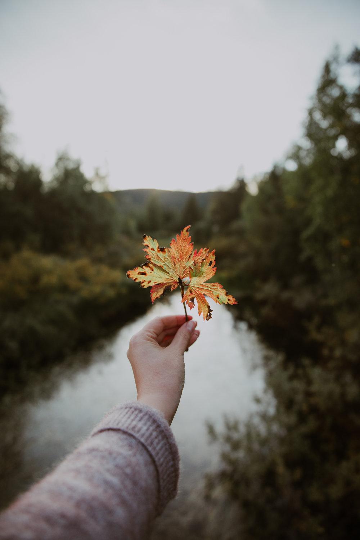 Luonto1.jpg