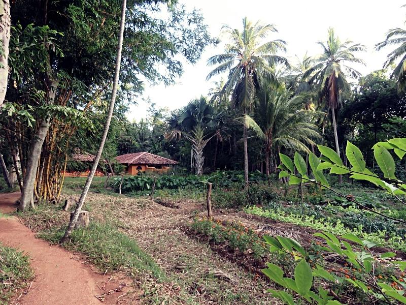 Navigating my way through the jungle