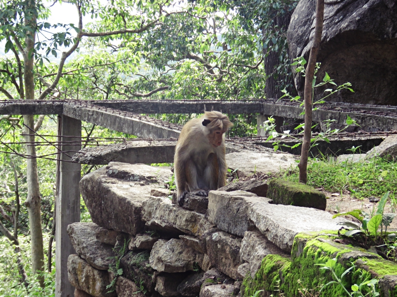 Not one of the monkey yogis