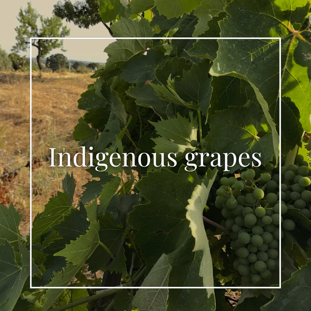 1.  We literally go out of our way to search out exciting, lesser-known wines made from native grapes. And while we may occasionally select blends reflecting the longstanding viticultural tradition of a certain region, Terrestoria focuses primarily on mono-varietals produced in their historic places of origin.