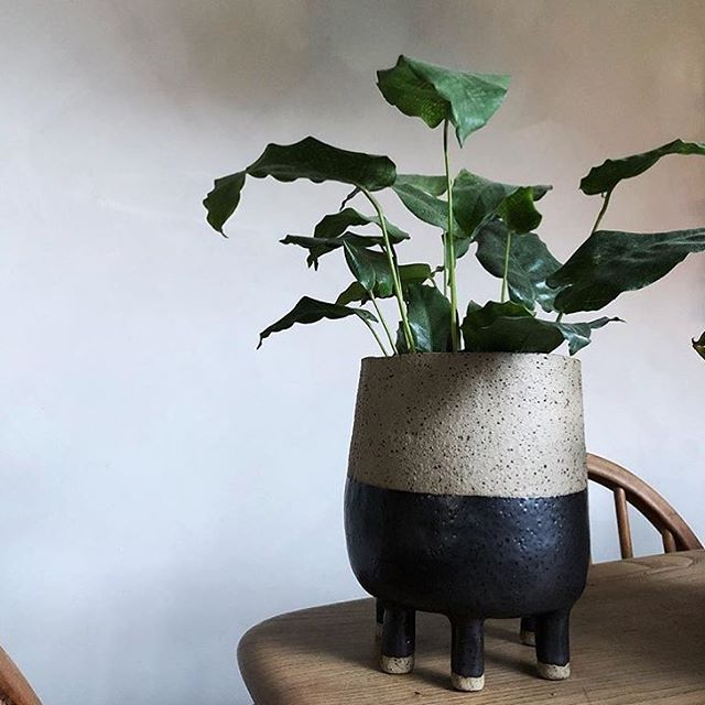 Plant society are @studio.local winter market this weekend with a new batch of pots! Photo @theplantsocietyau -check out their feed for details.