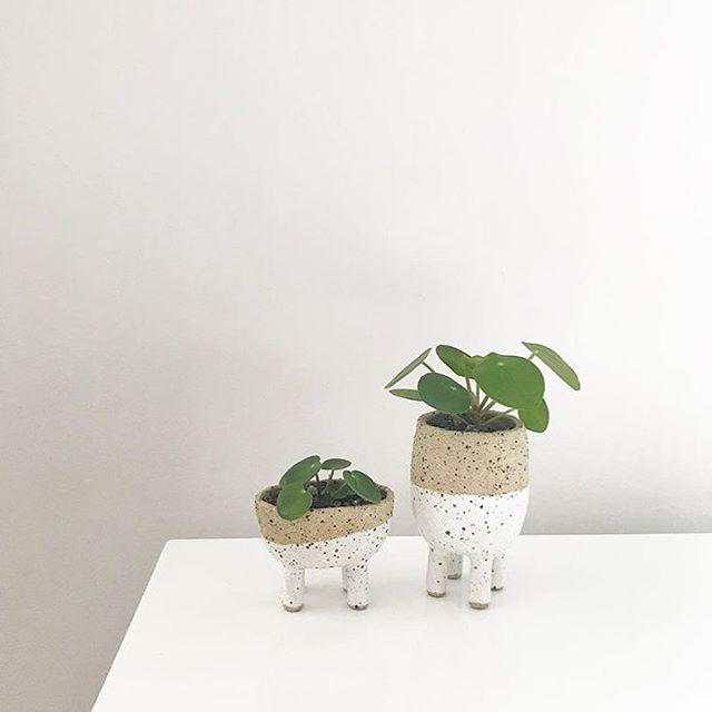 @plantbible making babies!  #luckyanna #pottery #ceramics #plants #pilea #leggypots