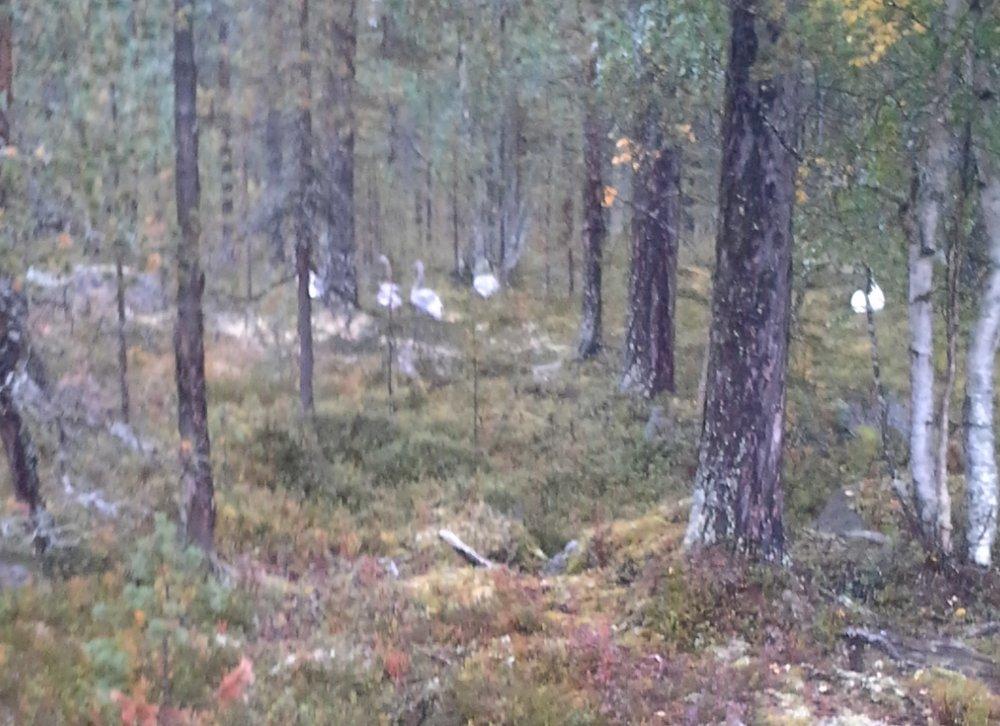 Foto: Reidar Åsgård ID:705