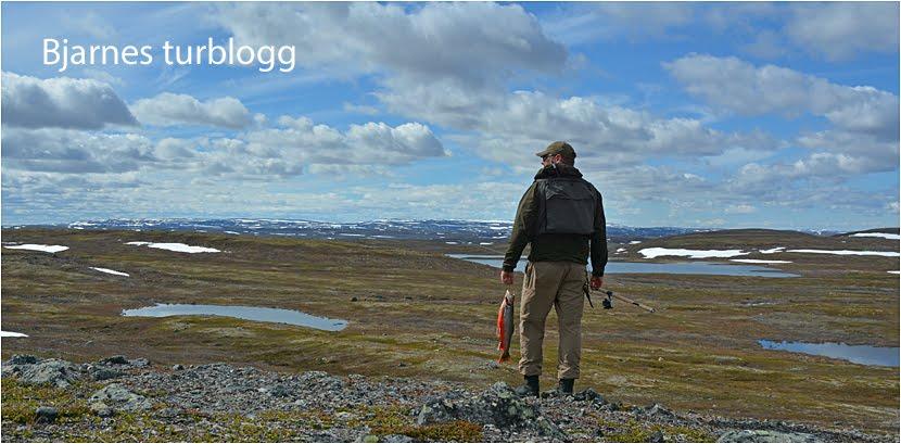 Foto: Bjarne Heyerdahl Sætrang ID:669