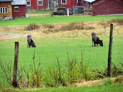Foto: Bjørnar Johnsen ID:624