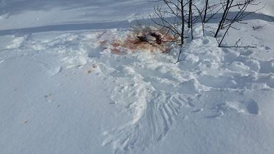 Foto: Arne Eliasse ID:594
