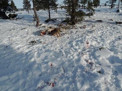 Foto: Bjørnar Johnsen ID:323