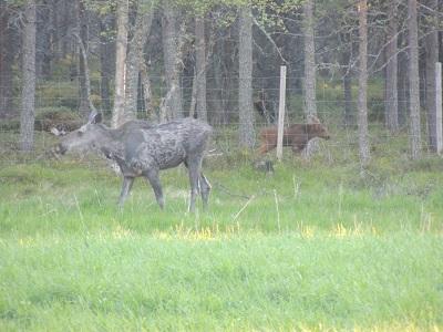 Foto: Bjørnar Johnsen ID:143