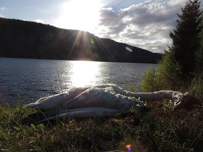 Foto: Bjørnar Johnsen ID:134