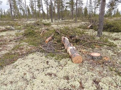 Foto: Bjørnar Johnsen ID:117