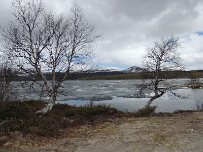 Foto: Bjørnar Johnsen ID:108