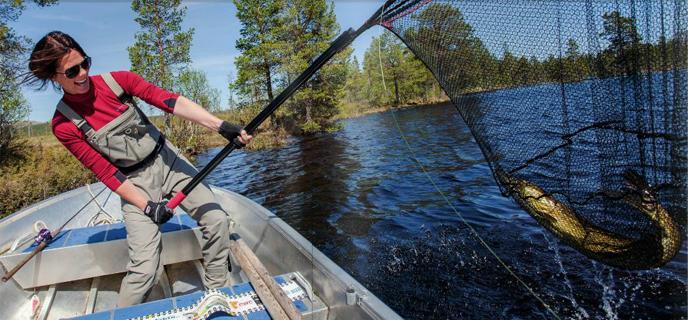Gjeddefiske Galten.jpg