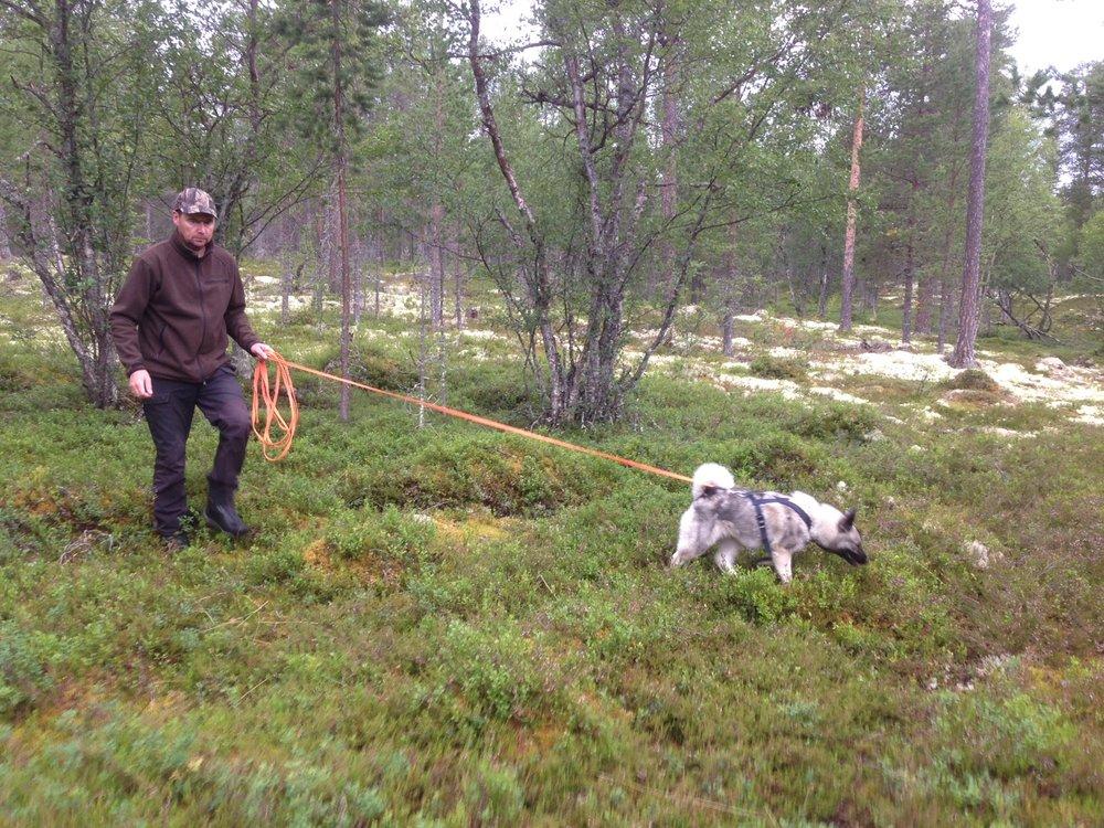 Foto: Odd Sømåen Bildet viser Lekåsens Guri med fjellstyrets administrative leder Ole Opseth som fører, under fjorårets fersksporprøve som ble bestått med god margin.