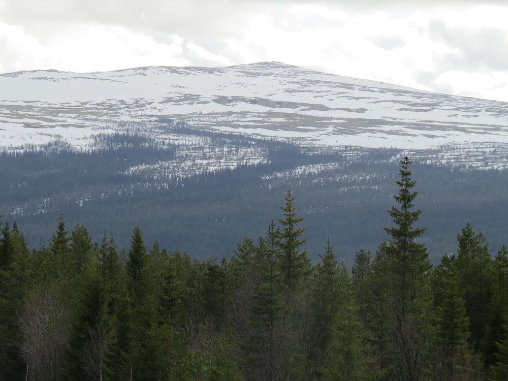 Foto: Arkiv/Ole Opseth