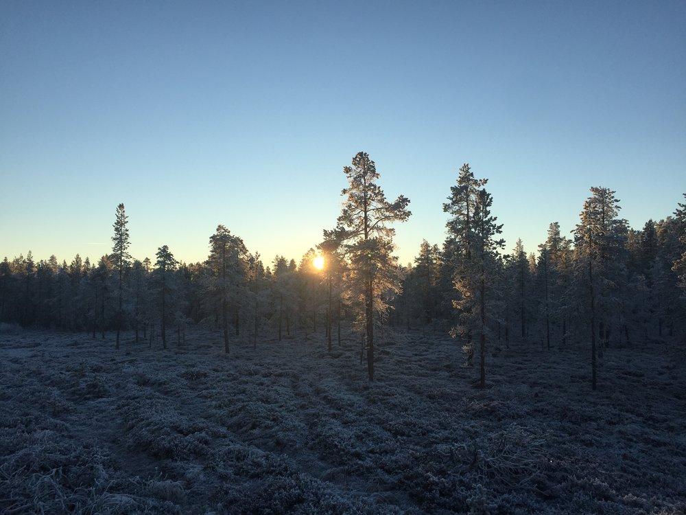 Sol i rimet skog.JPG