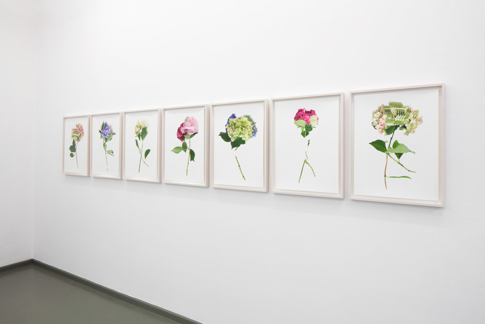 Ausstellungsansicht RANDOM FLOWERS, Rasche Ripken, 2018
