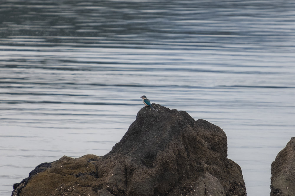 a Kingfisher!