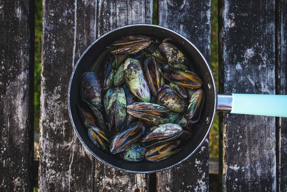 The mussels we collected in the tidal pools (Ashley got the biggest ones). Loves catching them, hates eating them.