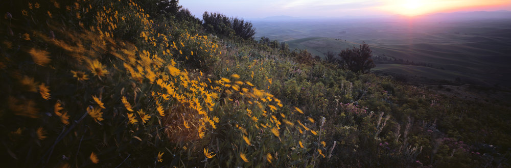 Steptoe Butte at sunrise. Ektar 100, 1/2 sec, f/35.