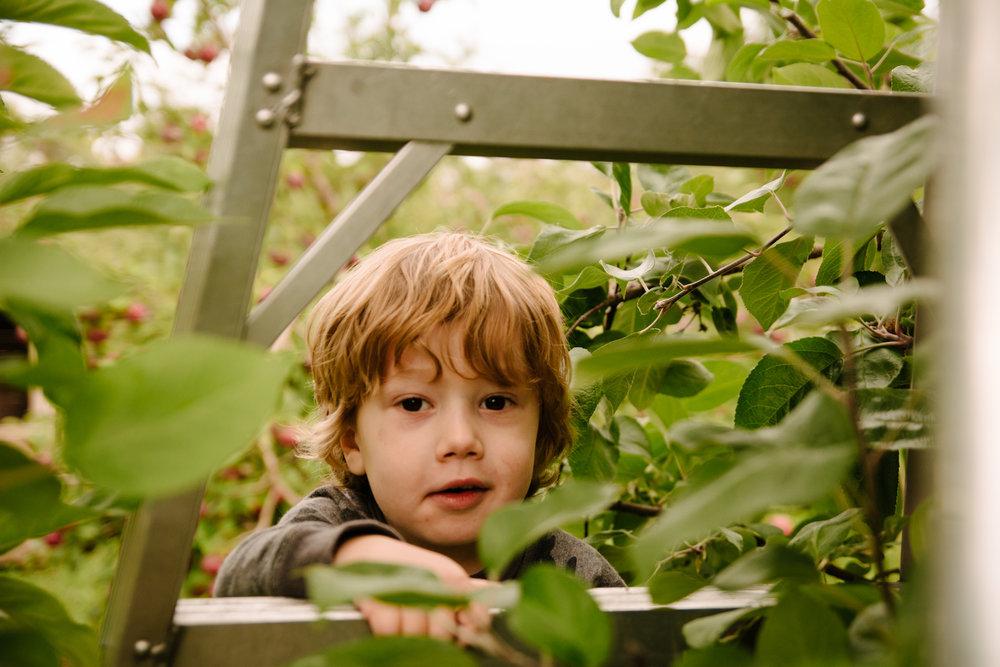 mini-seance-famille-elargie-aux-pommes-verger-des-bois-francs-plessisville-photographe-famille-victoriaville-montreal-24.jpg