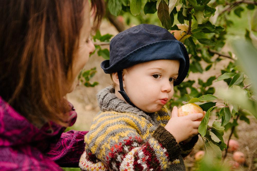 mini-seance-famille-elargie-aux-pommes-verger-des-bois-francs-plessisville-photographe-famille-victoriaville-montreal-18.jpg